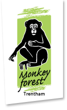 monkey-forest.com